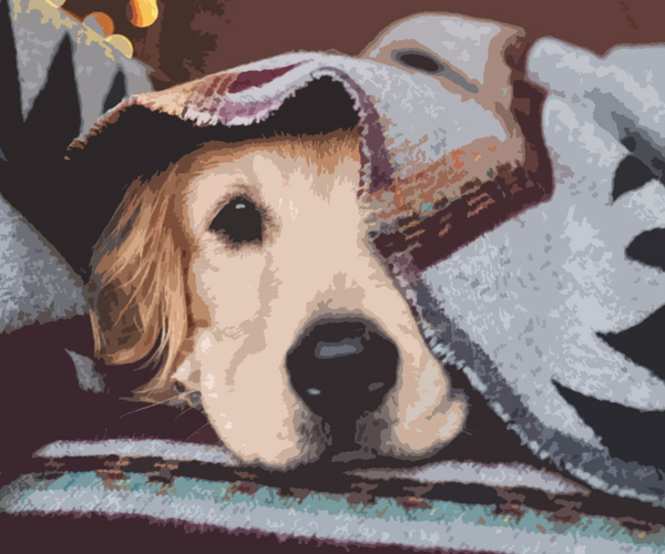 Paw Print Bangle Bracelet IBH Cat Lover Gift Boarding Kennel Gift Vet Gift Veterinarian-Open Animal Lover Gift- Dog Lover GIft