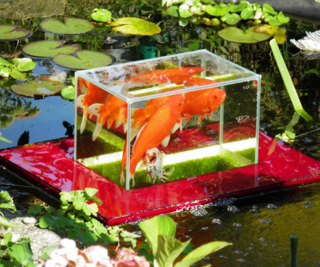 Floating Fish Observatory