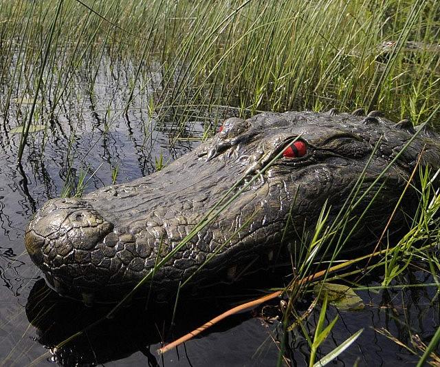 Floating Alligator Head Decoy