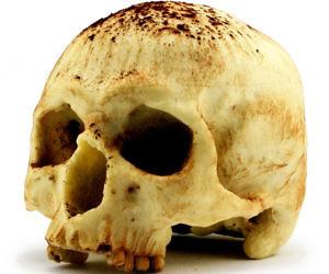 Anatomical White Chocolate Skull