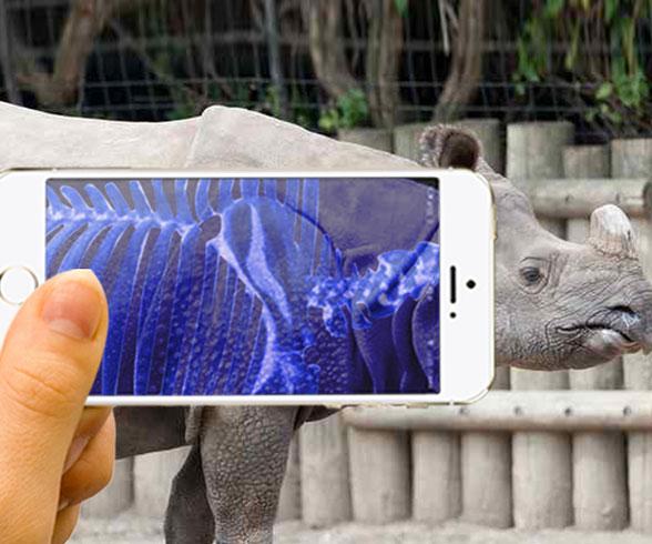 Animal X-Ray Scanner App