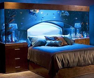 Ideal Aquarium Bed