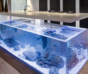 Aquarium kitchen for Labyrinth fish tank