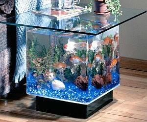 Aquarium Headboard labyrinth aquarium