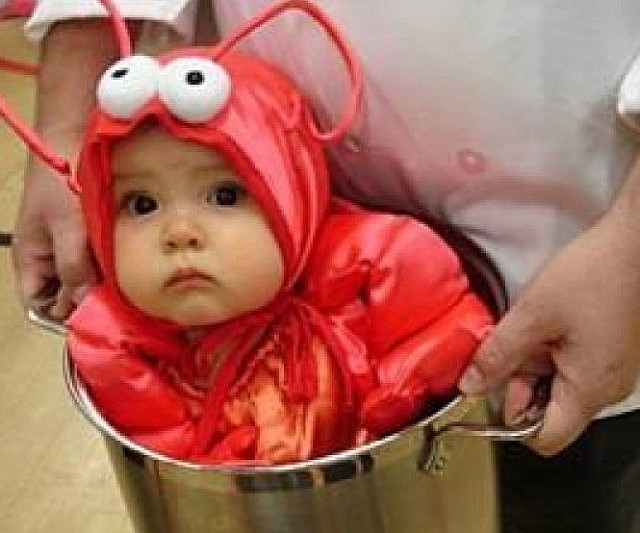 Baby lobster costume solutioingenieria