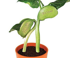 Break Up Bean Plant