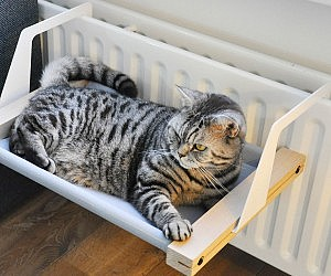 cat hammock  rh   thisiswhyimbroke