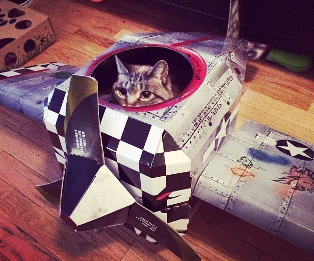 Cardboard Plane Cat Playhouse