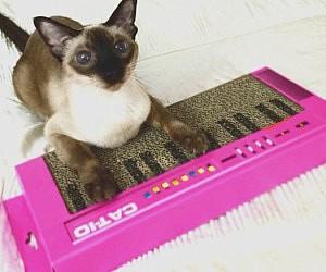 Cat Keyboard Scratcher