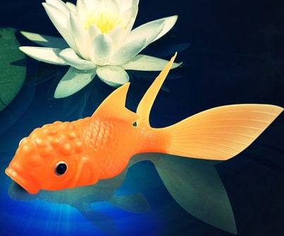 Color Changing Koi Fish Toy