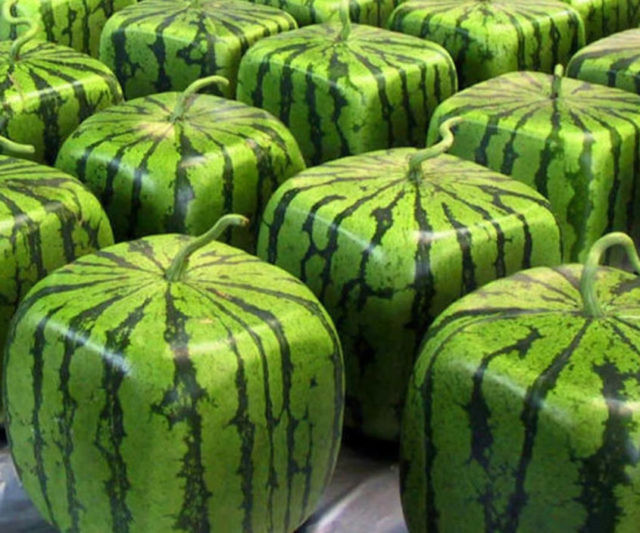 Cubed Watermelon Mold