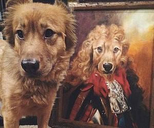 9a85c6d0022f Custom Pet Portraits