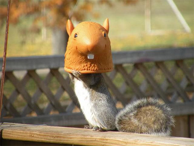 Squirrel Head Feeder