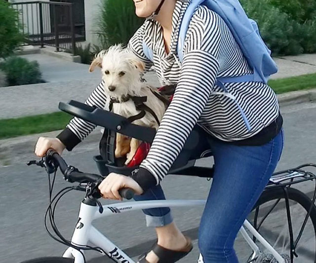 dog bicycle seats