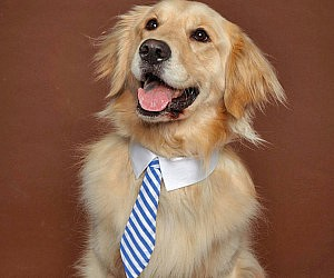 Dog Business Ties