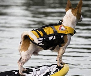 Doggy Life Vest