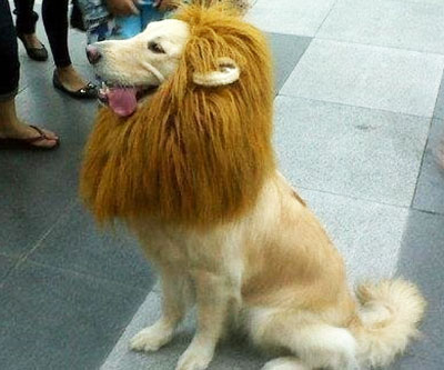 Lion Collar For Dogs