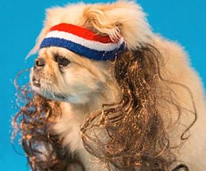 Dog Mullet Wig