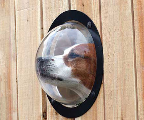 Dog Peek Window