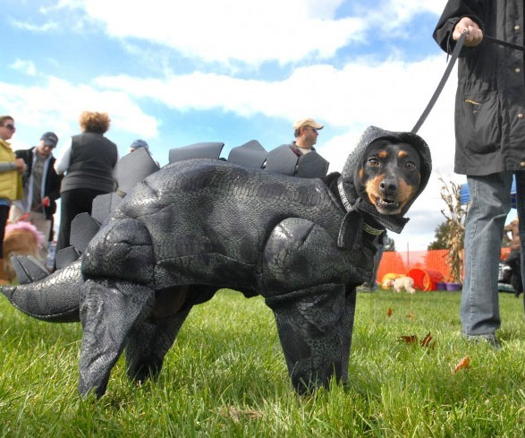 & Stegosaurus Dog Costume