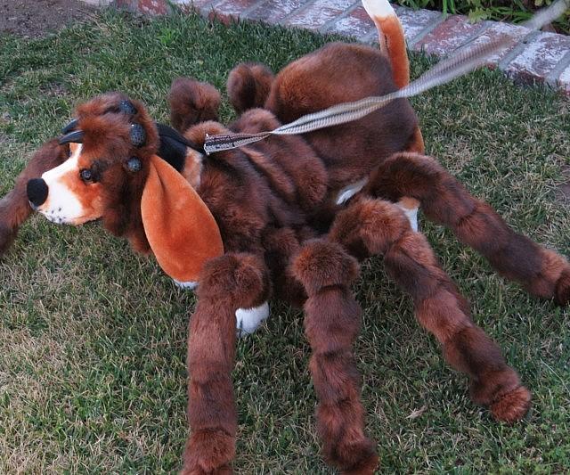 Y Spider Pet Dog Costume
