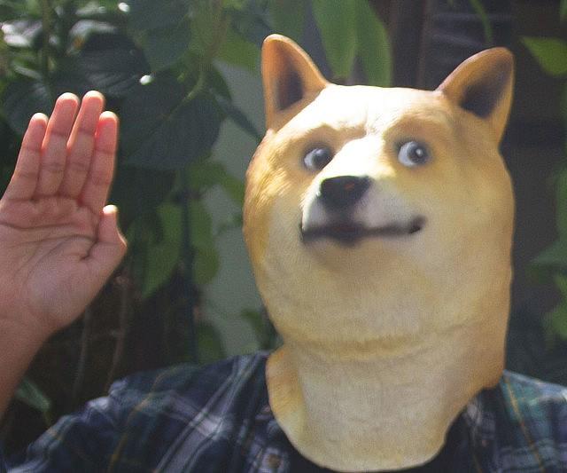 Mask doge mask solutioingenieria Choice Image