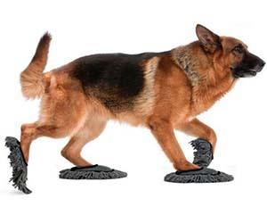 Dog Slippers For Hardwood Floors Flooring Ideas And