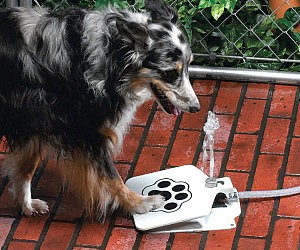Image result for water fountain for a dog