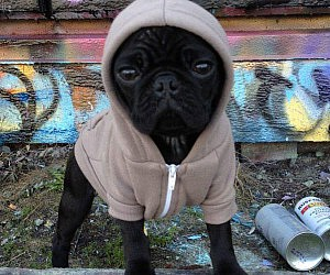 Doggy Zip Up Hoodie