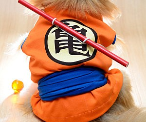 Dragon Ball Z Goku Dog Costume