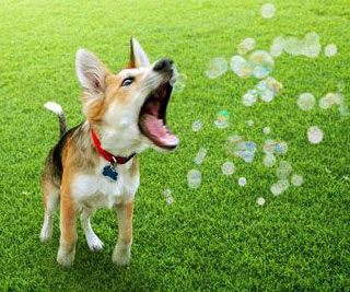 Flavored Edible Bubbles For Dogs
