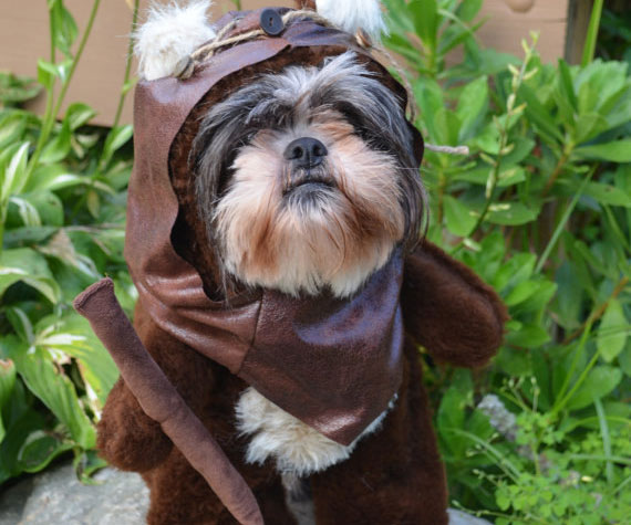 76cf782beea Ewok Dog Costume