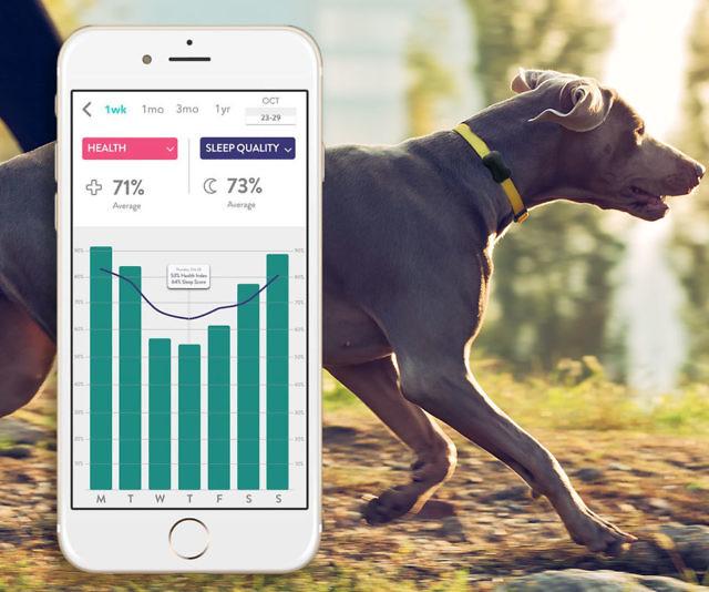 Dog Activity  U0026 Sleep Tracking Collar