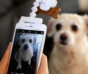 Treat Holder Phone Attachment