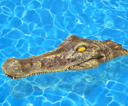 Floating Crocodile Head