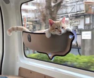 floating-window-cat-bed.jpg 0da8032826