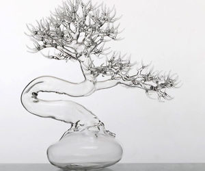 Bonsai Tree Care Ice Cubes Bonsai Tree