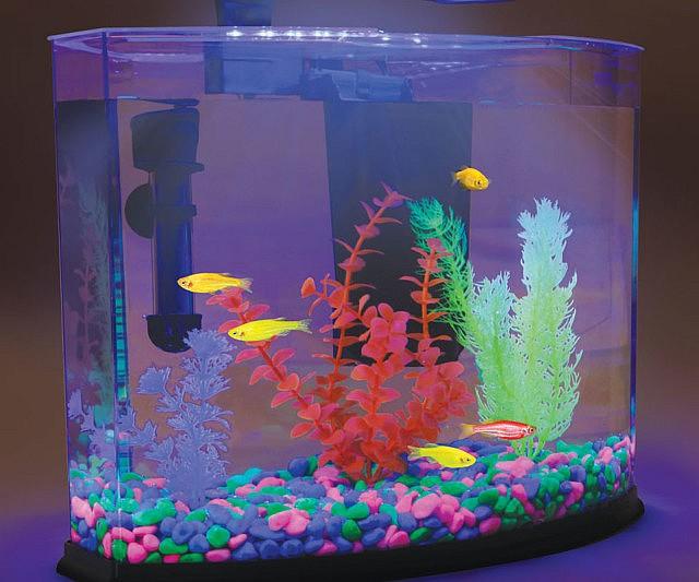 Glow in the dark aquarium for Glow in the dark fish tank