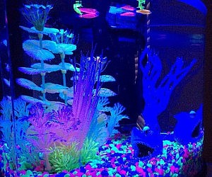 Glow In The Dark Aquarium Kit