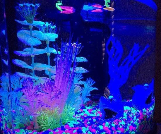 Glow In The Dark Aquarium Kit