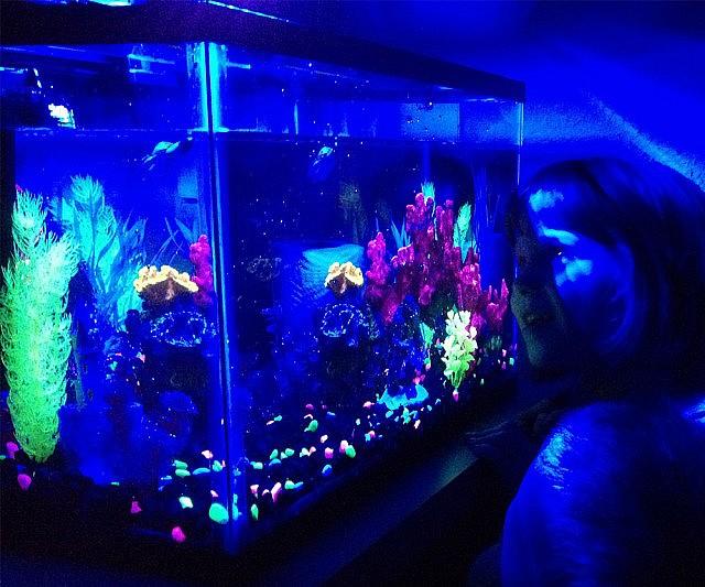 Glow In The Dark Aquarium