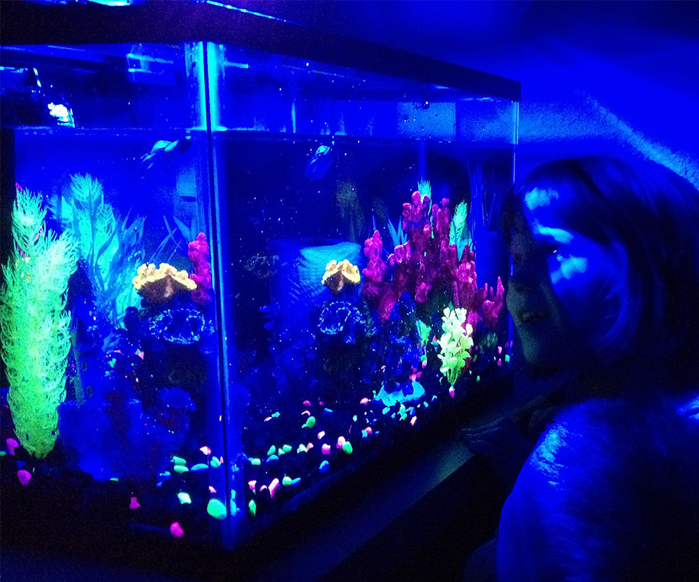 black light fish tank the image kid has it