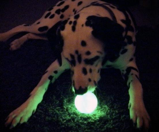 Glow In The Dark Dog Ball