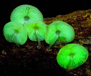 Glow In The Dark Mushrooms Kit