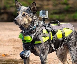 gopro dog harness 300x250 gopro dog harness dog harness at eliteediting.co