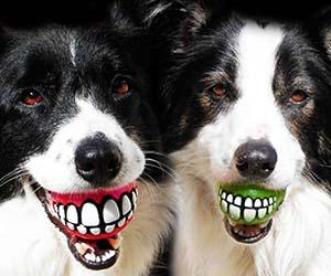 Grinning Teeth Dog Toy