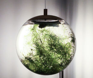 Hanging Spherical Terrarium