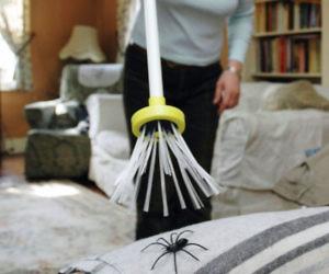 Mischief Free Spider Catcher