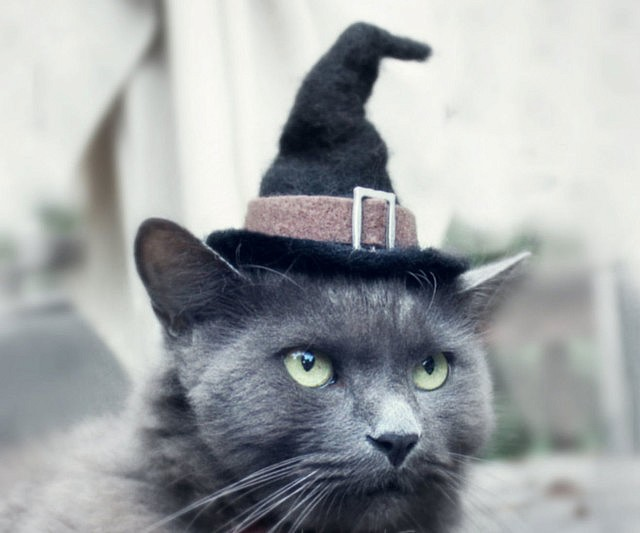 88dfecca31623 Hats For Cats