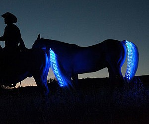 Horse Tail LED Lights